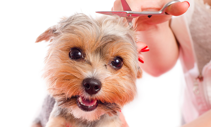 Arizona Pet Grooming Business For Sale